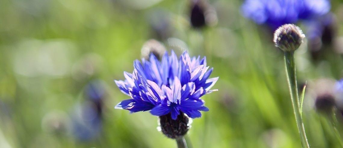 Flora Røros-traktene